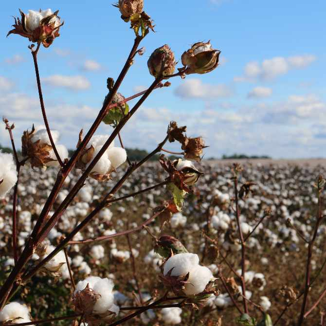 Going green? Consider these 7 natural fibres in your wardrobe